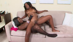 Pair of ebony sweethearts Coco and Xena are having a great time with a toy